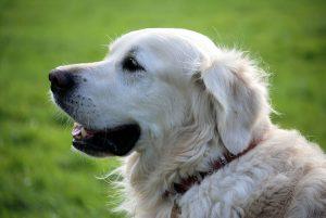 cauze tartru câine